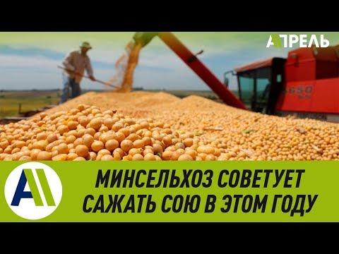 Минсельхоз советует сеять сою в этом году \\ 04.03.2019 \\ Апрель ТВ