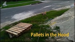 Pallets In The Hood