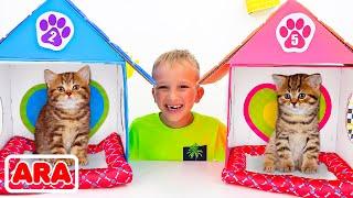 يلعب فلاد ونيكي مع قطط