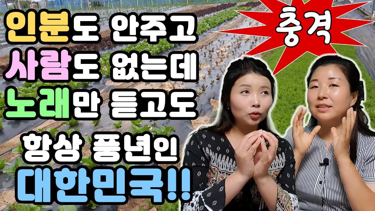 인분도 안주고 사람도 없는데 노래만 듣고도 항상 풍년인 대한민국!! with.김보빈