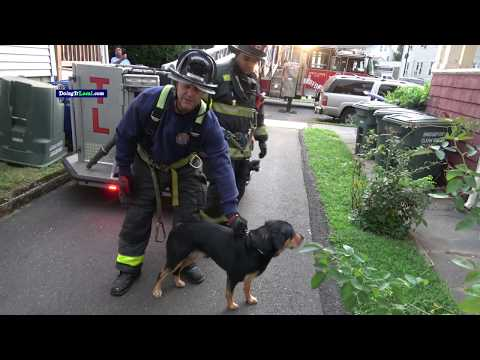 Pet Central - Firefighters rescue a dog stranded on the roof...for a second time!