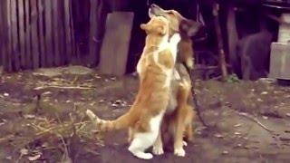 Приколи про котів [топ 10] Лучшие