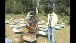 इस प्रकार करे मधुमक्खियों का पालन