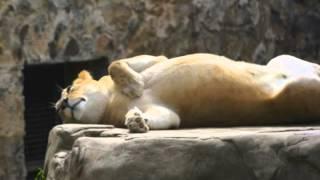 Zoologico de Cali Mi valle del Cauca Grupo niche Letra