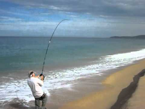 BIGGEST ROOSTERFISH EVER CAUGHT FROM SHORE
