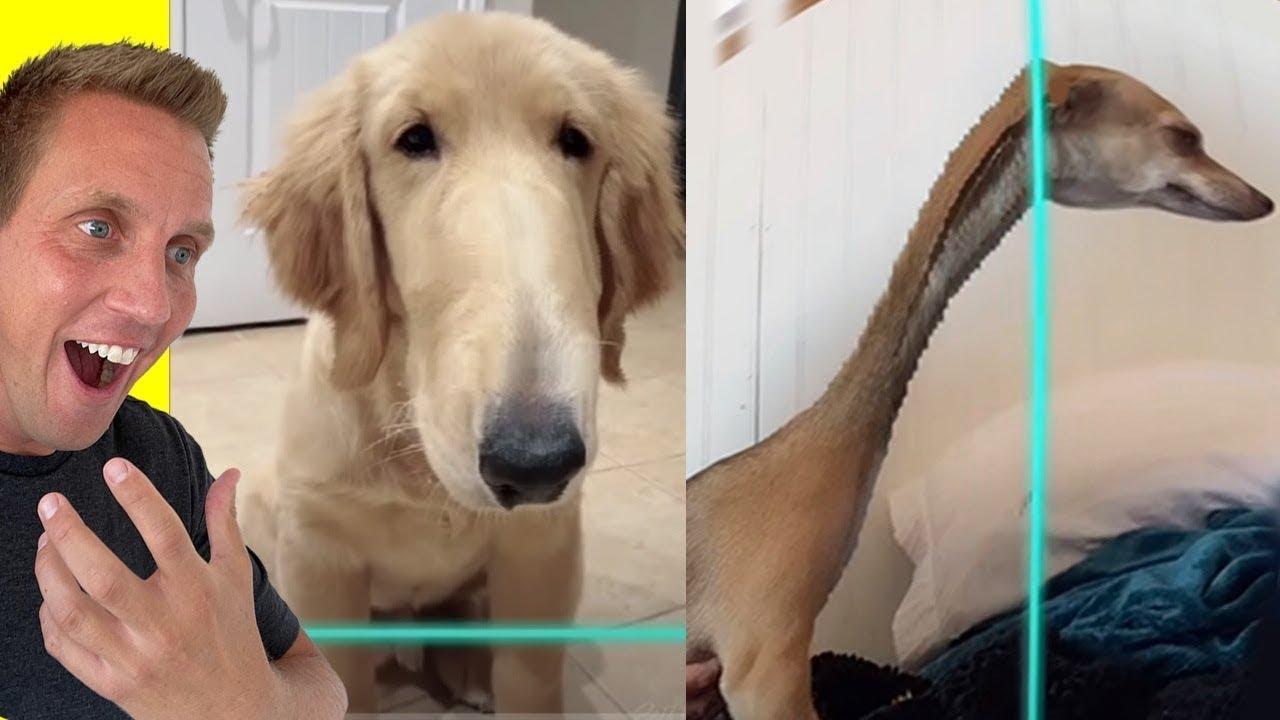 Funny Dog Time Warp Scan on TikTok!