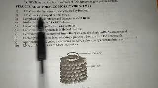STRUCTURE OF TMV ( Tobaco Mosaic Virus ) || BY PHANINDRA GUPTHA