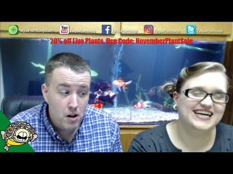 Planted Aquarium Questions.  Easy Aquarium Plants Live Stream.
