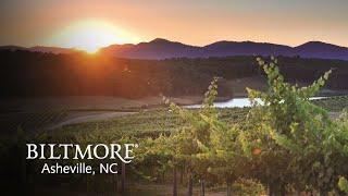 Virtual Tour: Biltmore Winery & Vineyards