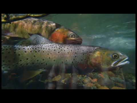 PERC Environmental Market Story: Trading Water for Trout