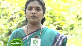 Best Rabbit Farm In Malappuram Part 2