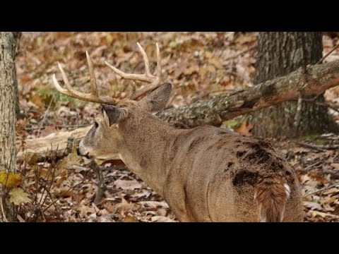 #1 Buck Bed Location To Hunt