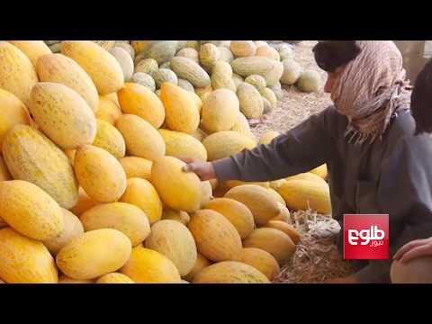 18 Tons Of Kunduz Melons Rot In Tajikistan