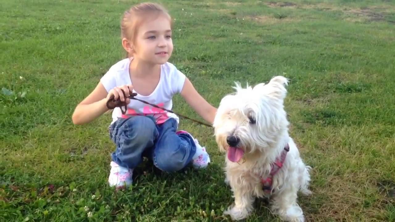 ЛУЧШАЯ СОБАКА ДЛЯ ДЕТЕЙ | Какая порода собак подходит для детей ? | Вест Хайленд - мой лучший друг!