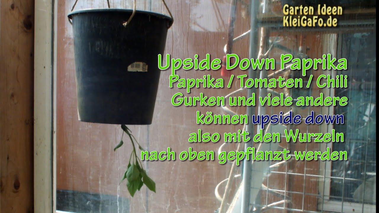 upside down planting paprika verkehrt herum youtube. Black Bedroom Furniture Sets. Home Design Ideas