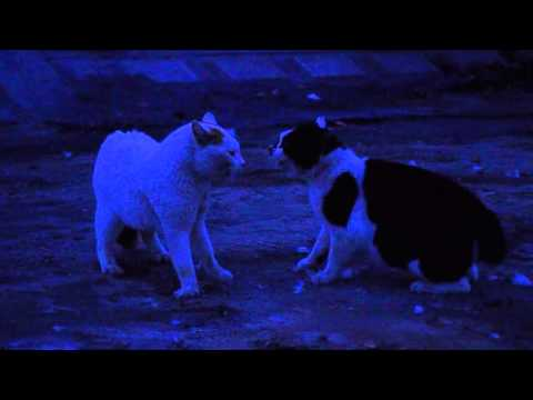 猫の大喧嘩