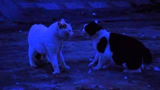 すさまじい猫の喧嘩に遭遇しました.