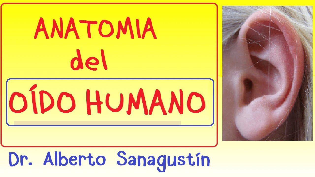 Anatomía Del Oído Humano Explicado Fácil