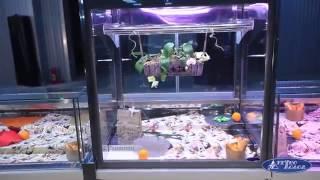 Витрины холодильные Технохолод модельного ряда Миссури на torgoborud.com.ua(Холодильные витрины Миссури от украинского производителя Технохолод является воплощением качества, надеж..., 2015-08-21T12:34:34.000Z)