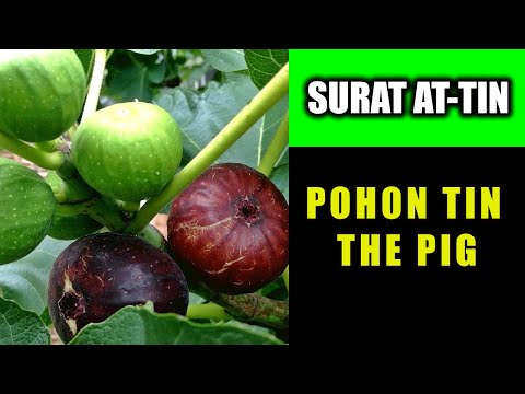murotal-surat-at-tin-subtile-inggris-indonesia-abdul-rohiman