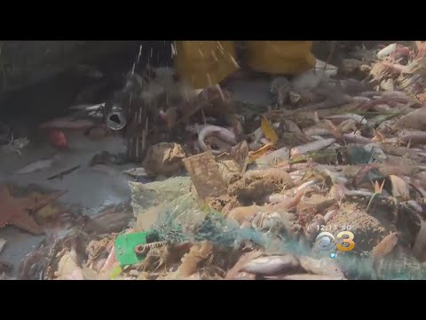 Fisherman, Clothing Company Turning Plastic In Sea Into Clothing