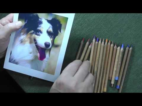 how to pick pastel pencils for a border collie youtube