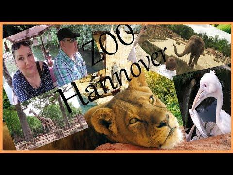 Zoo Hannover | Erlebnis Zoo 🐘 Böse Blicke vom Gorilla ! Mai 2018