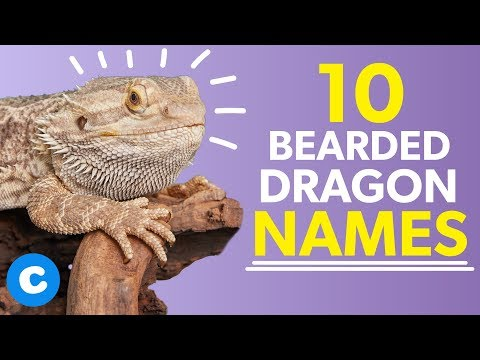 10 Names for Bearded Dragons | Chewy - YouTube