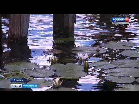 Жители Бежецка жалуются на загрязнение местной реки