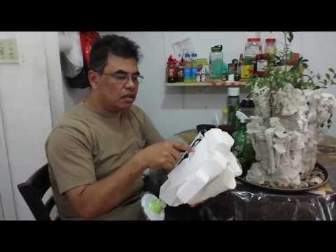 How to create Penjing Rock plant + plants grow from seeds. 8.27.2017 Bamong's Day5