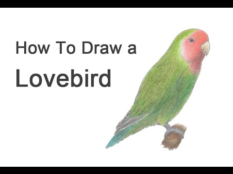 How to draw a lovebird youtube