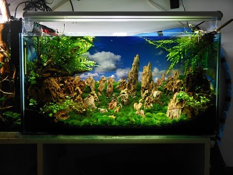 Ivory Tower Aquascaping aquarium setup step by step