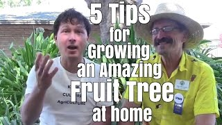 5 Tips for Growing an Amazing Fruit Tree at Home
