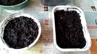 Секреты, как вырастить шпинат на балконе или подоконнике легко и просто