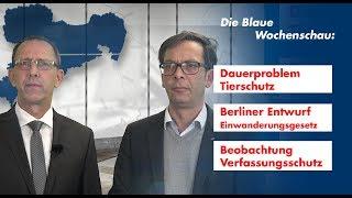 Die Blaue Wochenschau:  Tierschutz, Entwurf Einwanderungsgesetz, der Verfassungsschutz
