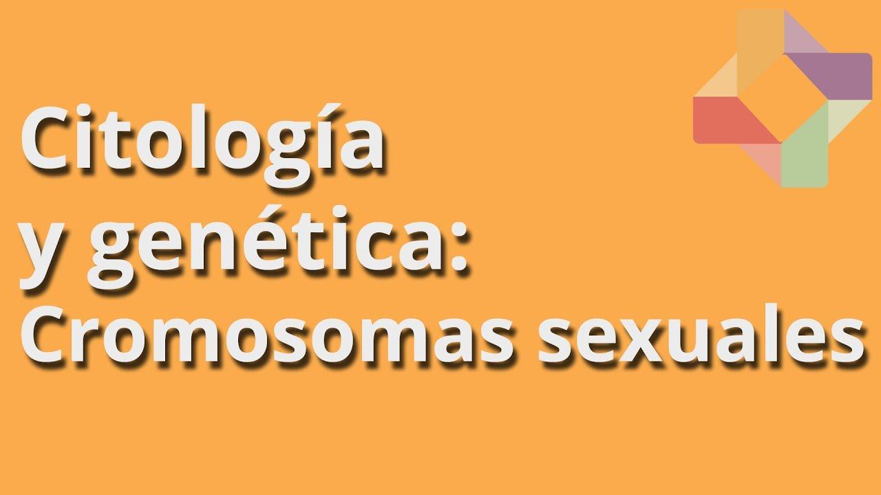 Cromosomas sexuales