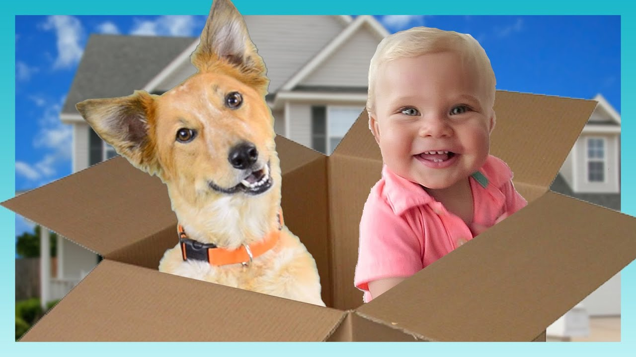 Download MOVING DAY!   Look Who's Vlogging: Daily Bumps