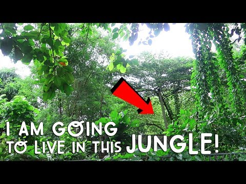 I Am Going To Live In This Jungle!   Vlog #173