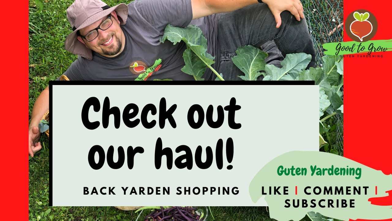 Healthy Grocery Haul from Backyard Garden | Urban Vegetable Garden Harvest Tour | July 2020 | Zone 5