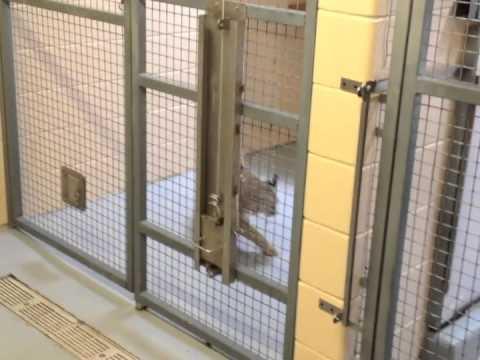 skyenimals spotlight bobcats backstage at cosley zoo youtube