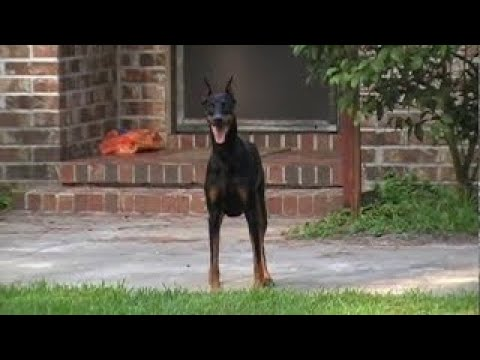 Dog on Patrol