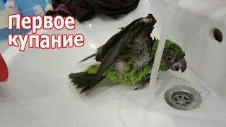 VLOG: Попугай захотел купаться / Подарок Климу за хорошее поведение