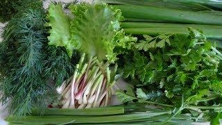 ЗЕЛЕНЫЙ САЛАТ ВИНЕГРЕТ МОЛОДОСТЬ натуральные витамины для здоровья Чистка кишечника Похудение