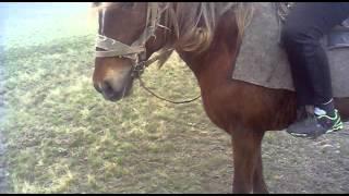 Я на лошади