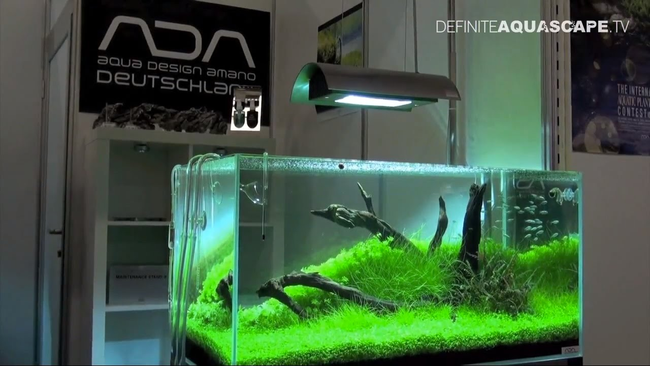 Aquarium ideas from interzoo 2012 pt 34 ada for Ada fish tank