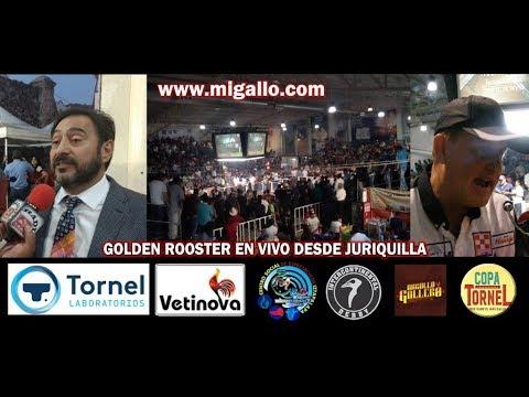 DESDE EL GOLDEN ROOSTER DE JURIQUILLA EN VIVO