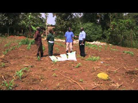 SoilCares Africa On Hit TV Show, Shamba Shape Up in Magamaga West Village in Uganda