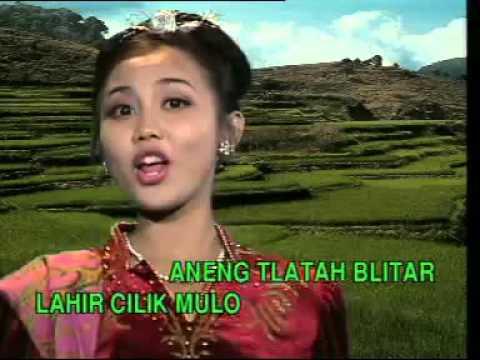 Cici Shahita   Blitar