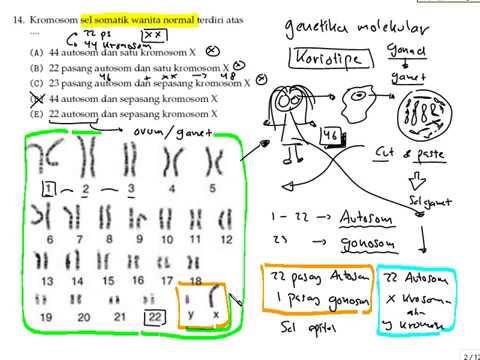 Kariotipe kromosom pada perempuan youtube kariotipe kromosom pada perempuan ccuart Images