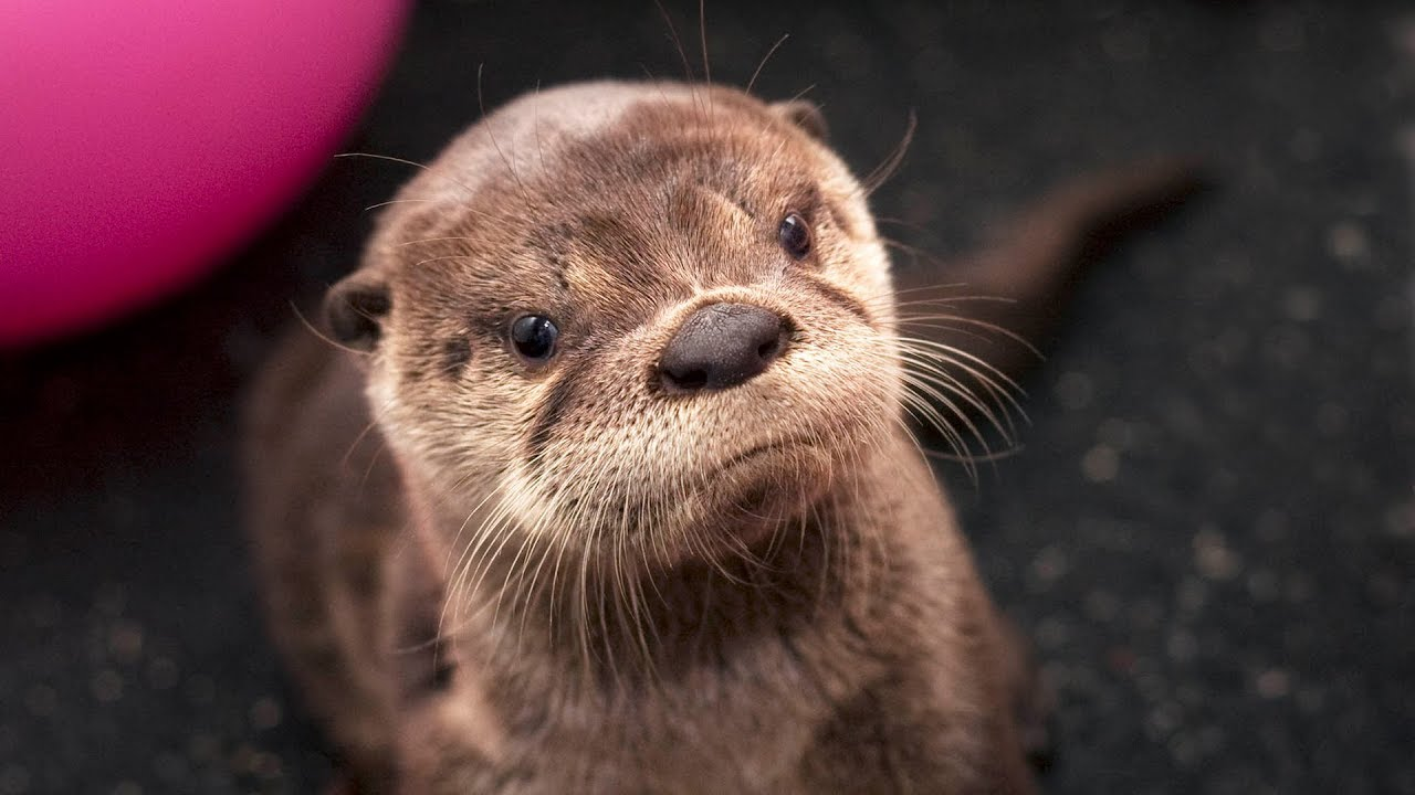 ae94e78ac710 Tilly The River Otter - In Otter News
